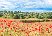 Poppy field and Steam train