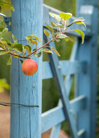 Red apple against the blue gate